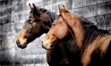 Integrating Somatic Experiencing® and Trauma Neuroscience into Horse-Human Relationships