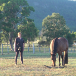 Somatic Experiencing® for Horses?
