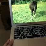 Horse Time From Home: Pandemic Ideas for Clients and Facilitators